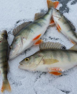 ice fishing 2919070 1920 330x400 - Talvikalastus