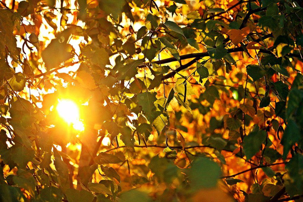 Ray of the sun seen through colourful autumn leaves