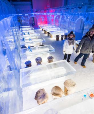 dsc01254 330x400 - Experience365 - Jääravintola IceRestaurant365